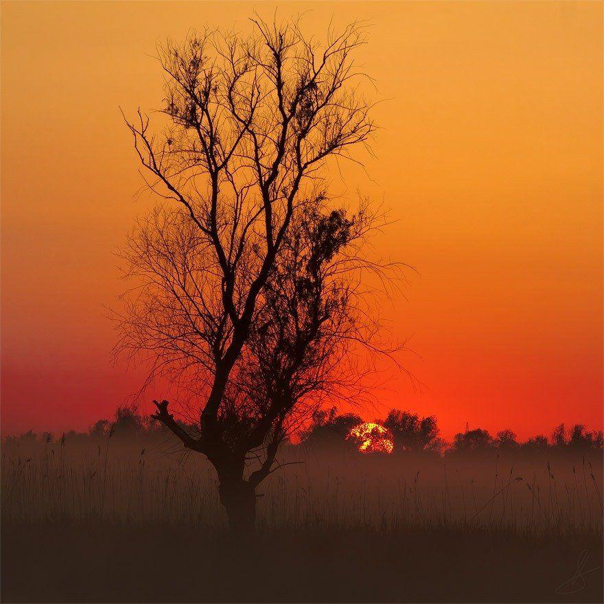рассвет, солнце, утро, туман, Будин Николай
