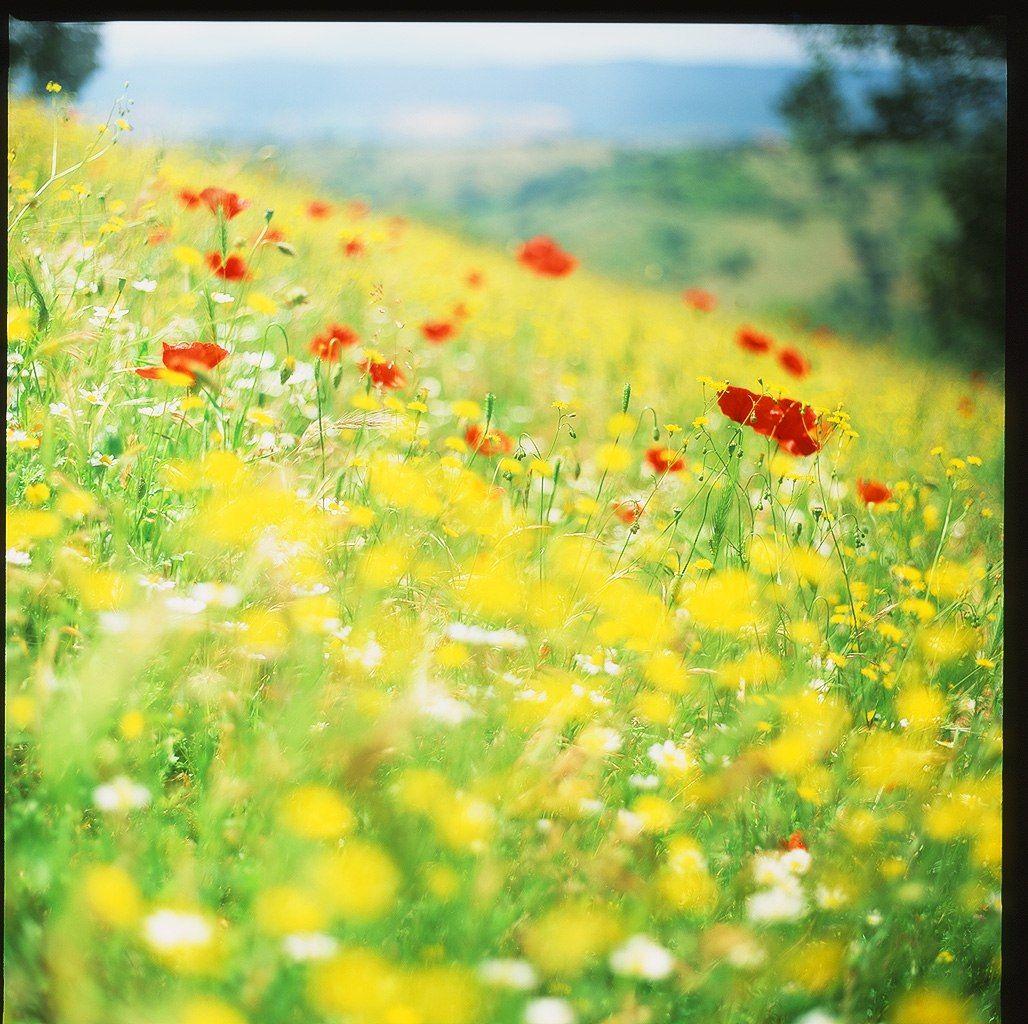 маки, поле, цветы, лето, тоскана, италия, холмы, Евгений Молодцов