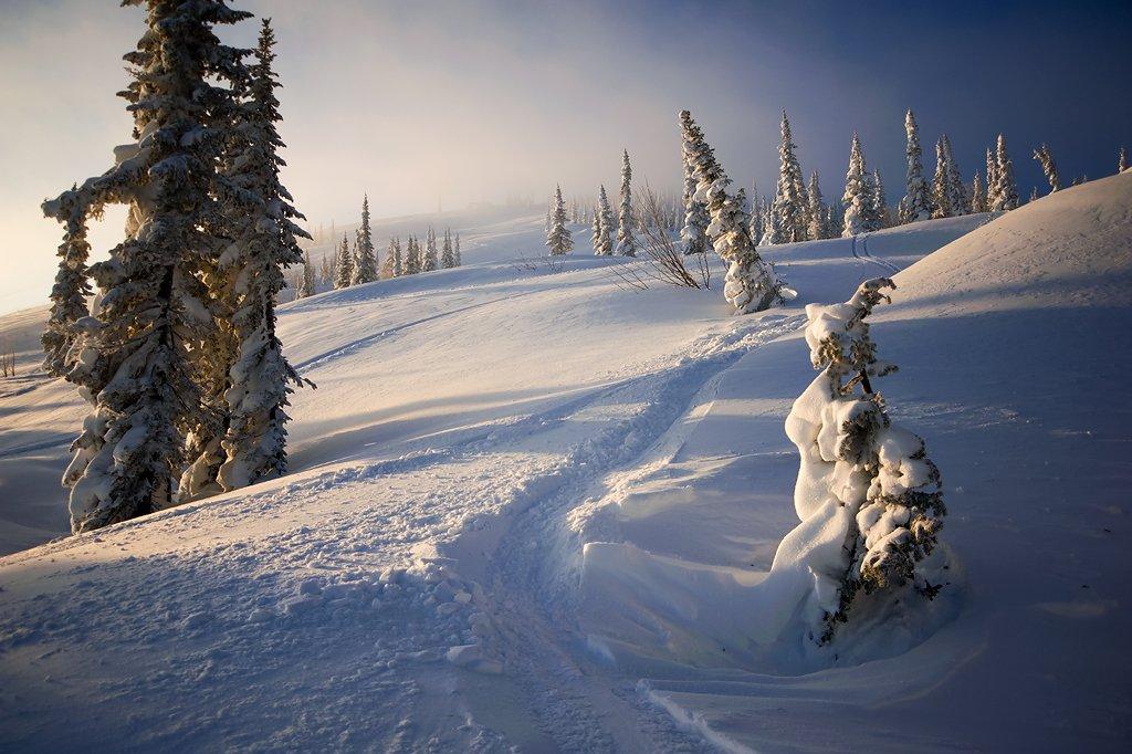 шерегеш, гора зеленая, утро, пихты, свет, тени, горная шория, Валерий Пешков