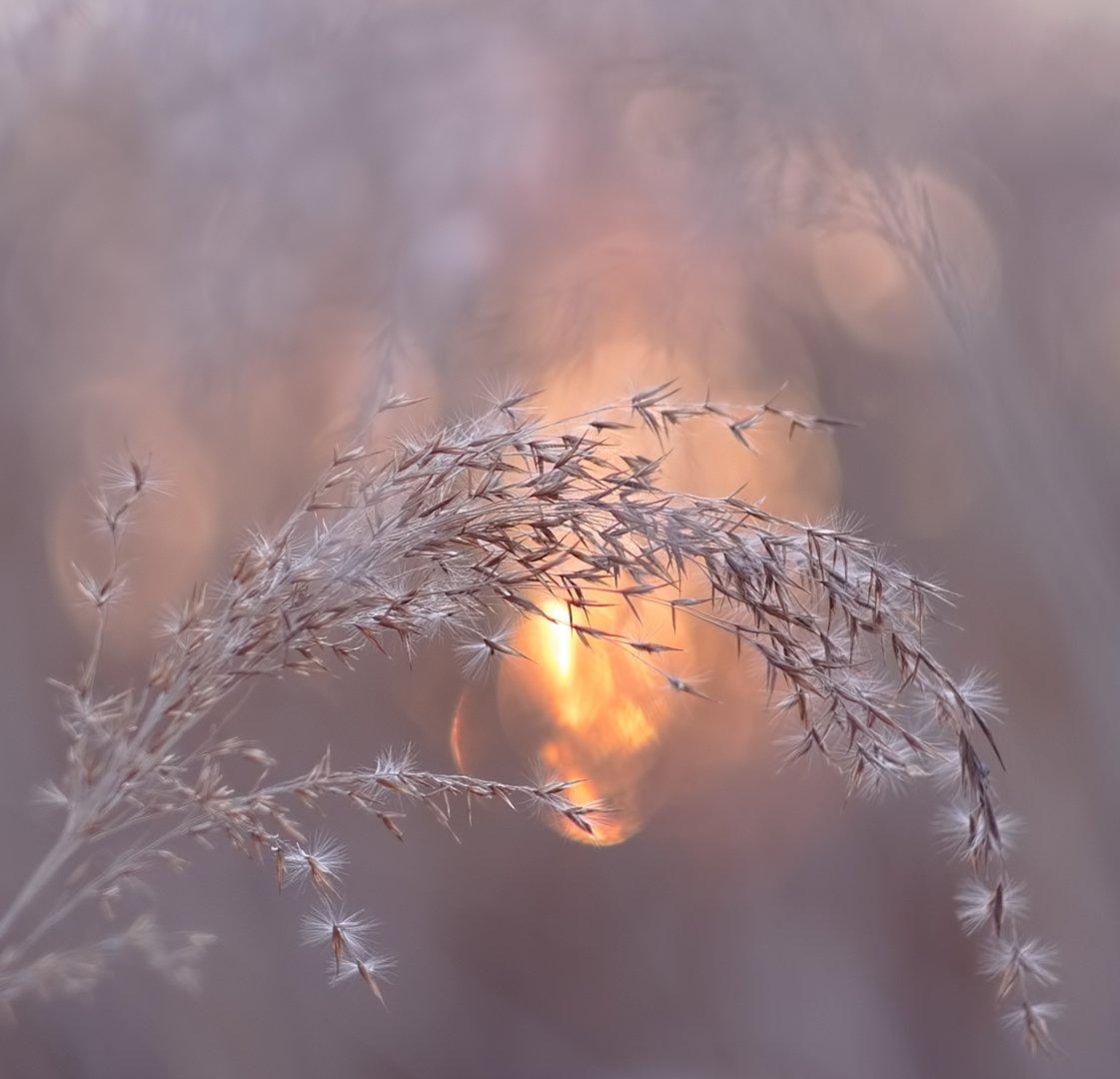 вечер, закат, приморье, природа, Евгений Паршуков