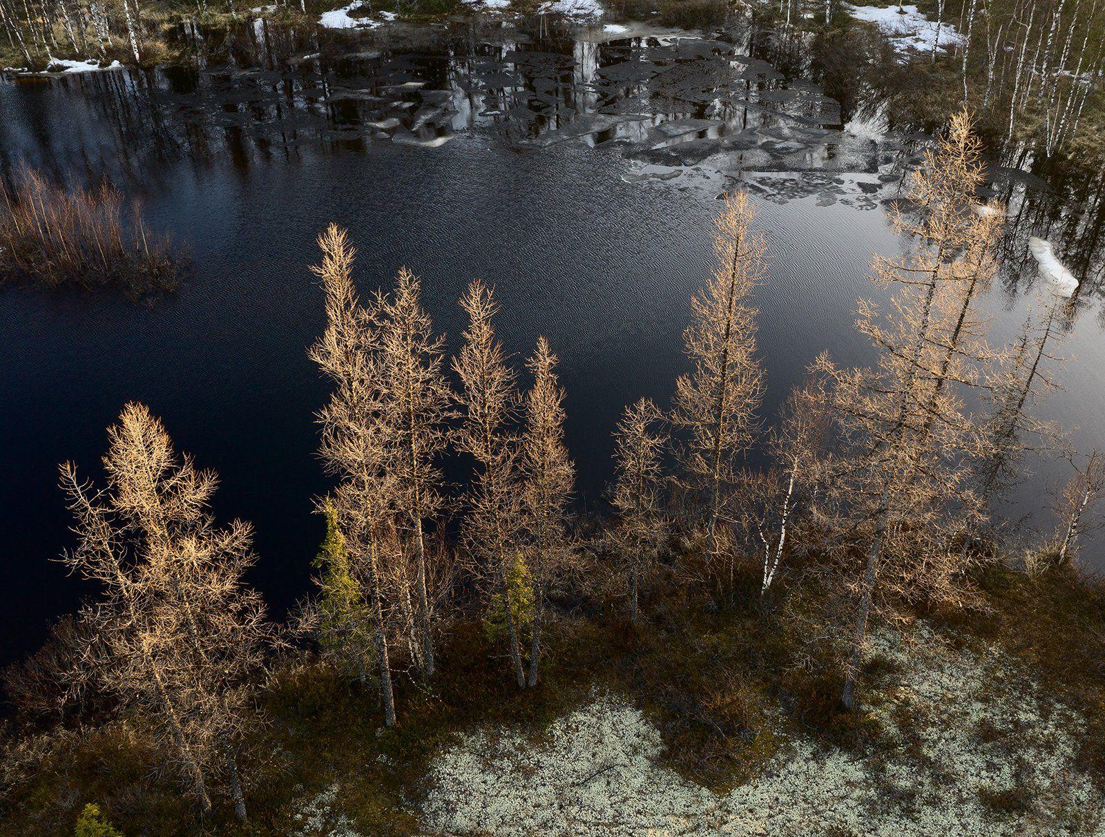 природа, лес, весна, сибирь, янао, ямал, деревья, май, Андрей Снегирёв