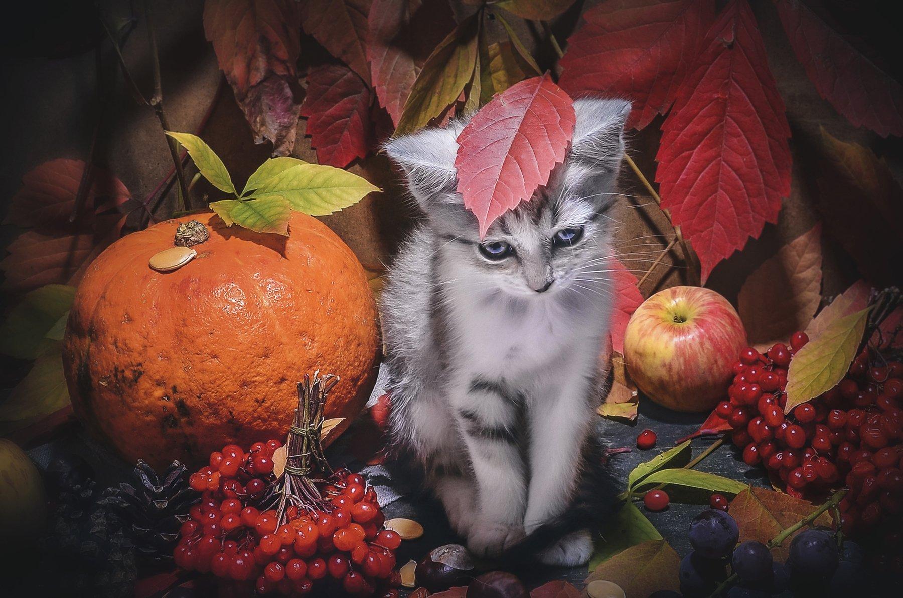 осень,фрукты,овощи,котёнок,грусть,листья, Володин Владимир
