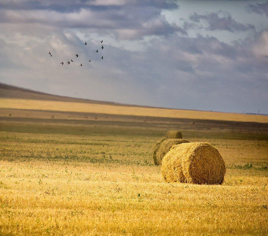 осень,сено,солома,поле, Качурин Алексей