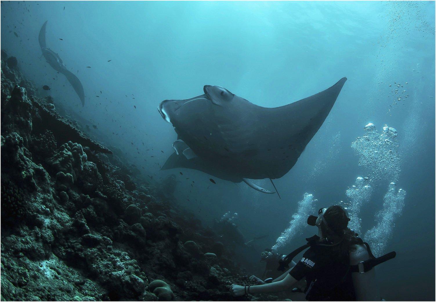 индийский океан, мальдивы, манты, подводный мир, Сергей Гаспарян