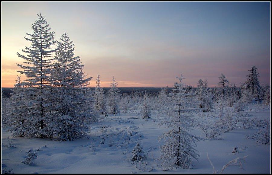 утро, зима, тайга, Солодухин Виктор