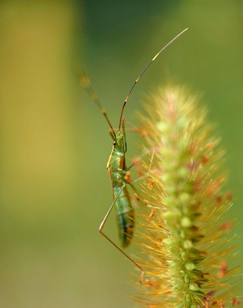 macro, closeup, insect, макро, насекомые, gnilenkov, Alexey Gnilenkov