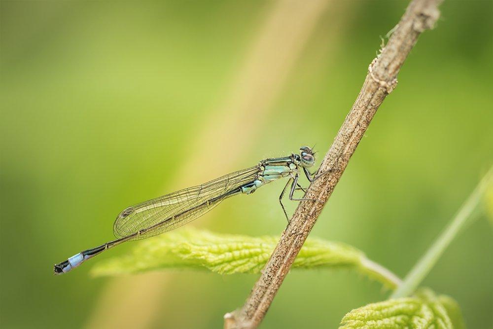 стрекоза, макро, dragonfly, macro, Хилько Марина