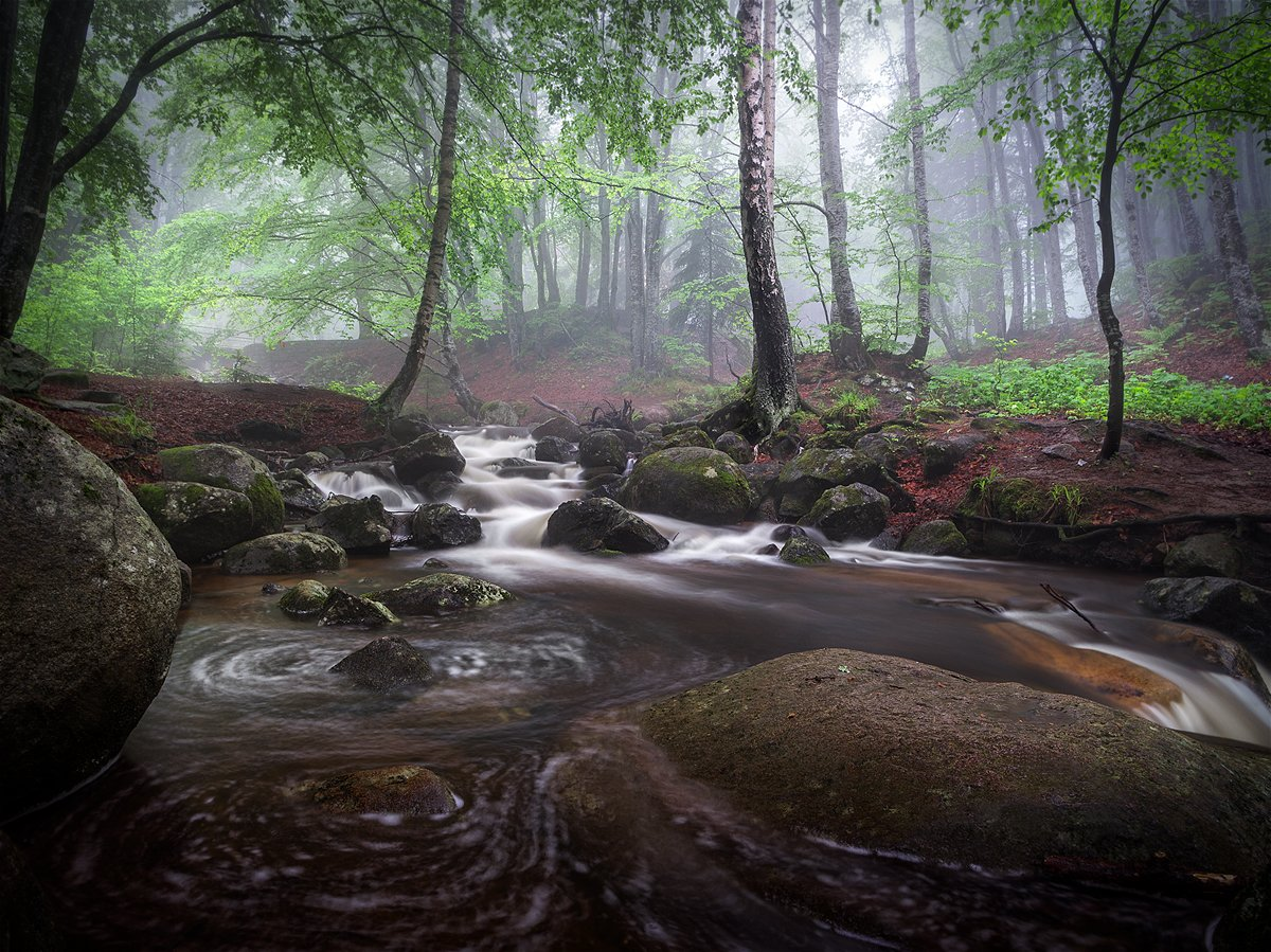 landscape nature scenery forest wood  june spring summer mist misty fog foggy river trees mountain vitosha bulgaria туман лес река, Александров Александър