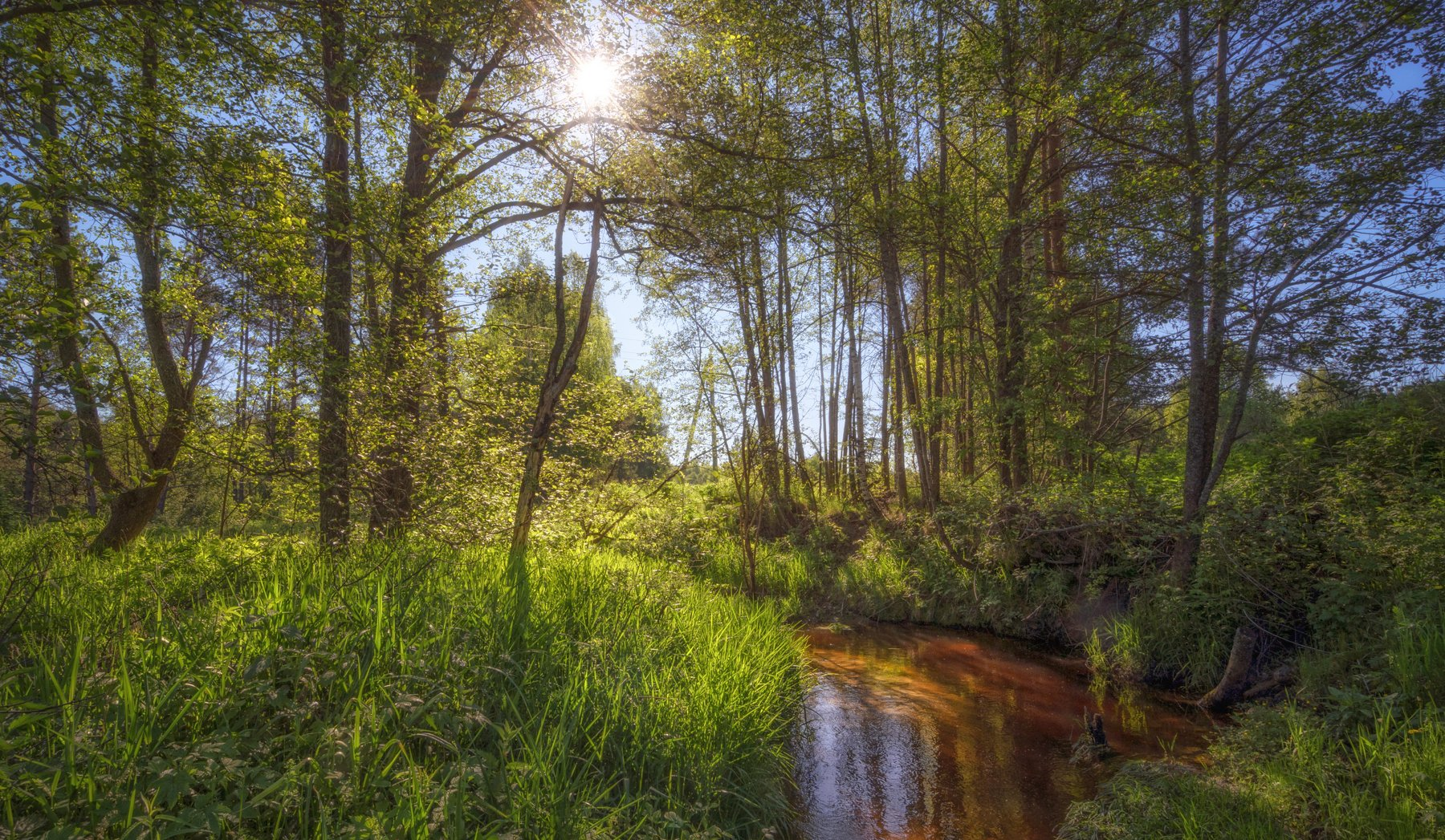 утро июнь лесная речка, Колесов Андрей