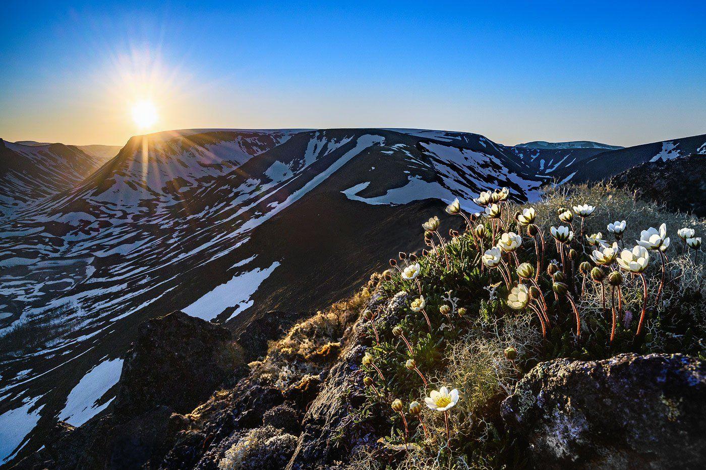 хибины, горы, вершина, лето, солнцестояние, цветы, ночь, полярный день, Григорий Ильин