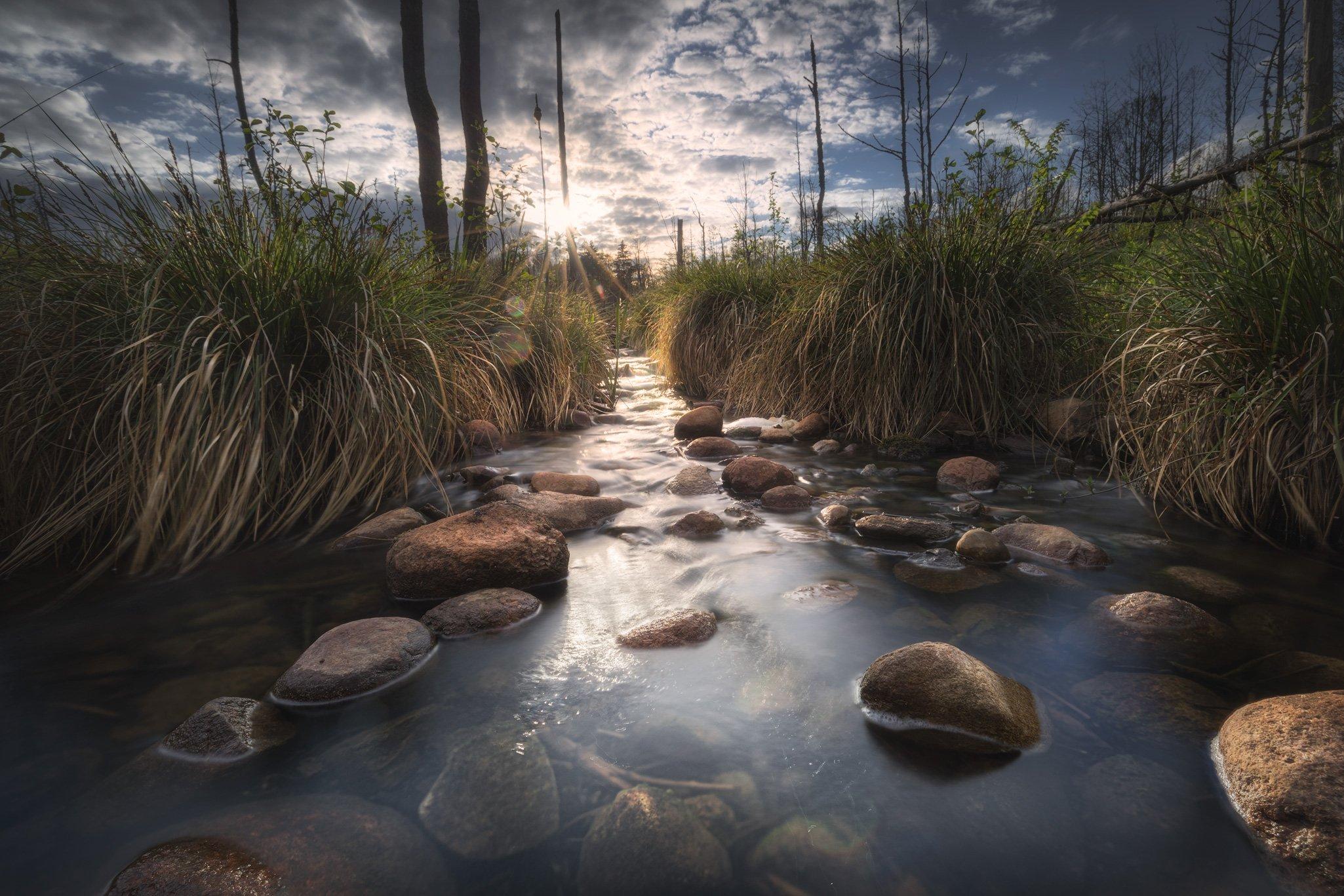 creek water river stones trees swamp grass Podlasie Poland, Maciej Warchoł