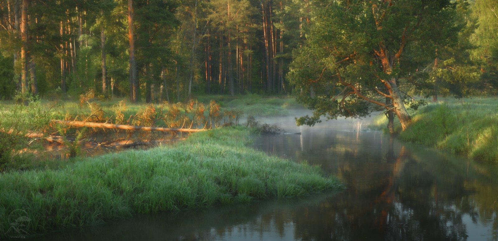 утро, река, туман, сосны, Гордиенко Анатолий