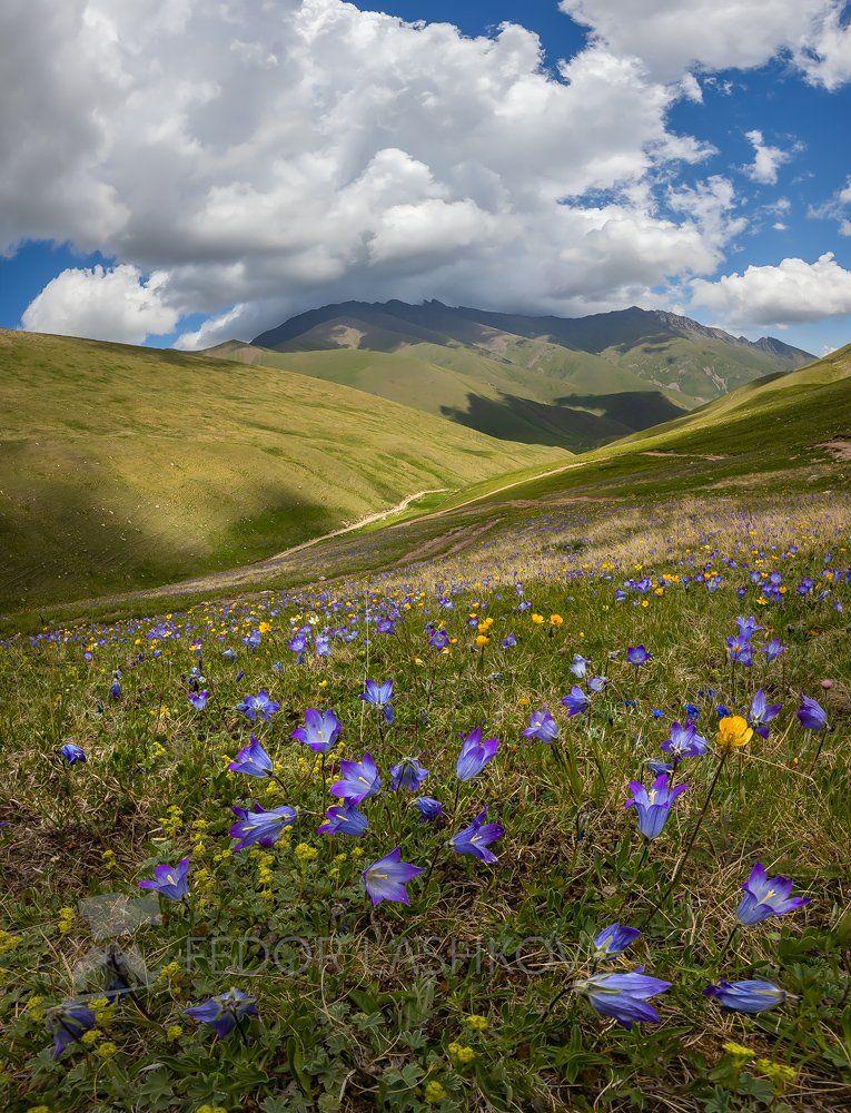 горы, гора, домбай, долина, муху, альпийские, луга, колокольчик, цветы, цветущие луга, цветок, лето, весна, в горах, облака, теберда,, Лашков Фёдор