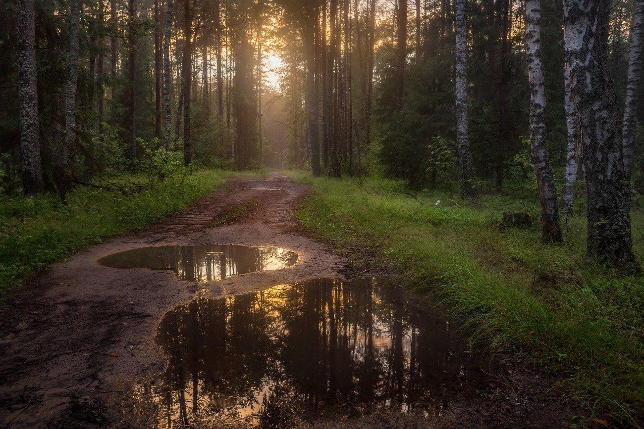 вечер туман лес дорога лужи, Дмитрий Алексеев