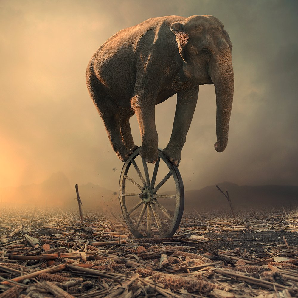 wheel, spinner, elephant, ground, sky, light, reflection, corn, manipulation, tutorials, psd, clouds, mounting, Caras Ionut