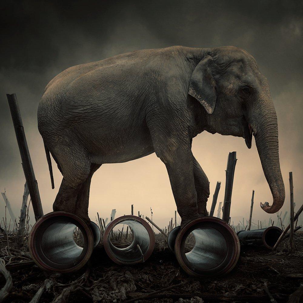 sky, reflection, light, clouds, ground, manipulation, elephant, mounting, wheel, corn, psd, spinner, tutorials, Caras Ionut