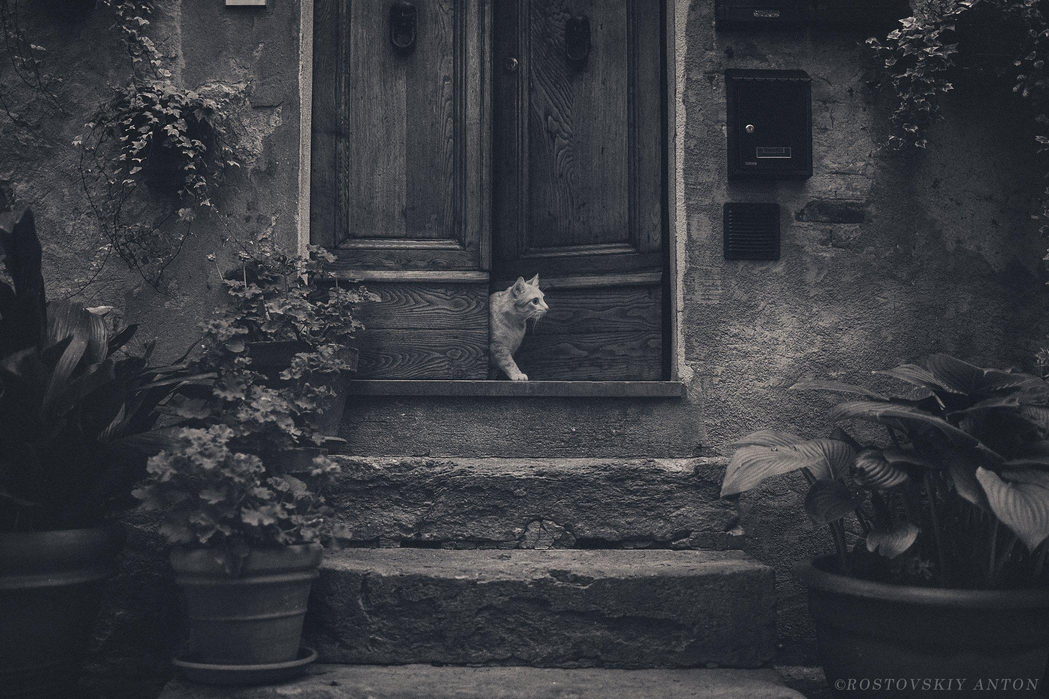 кот, город, крыльцо, фототур,, Ростовский Антон