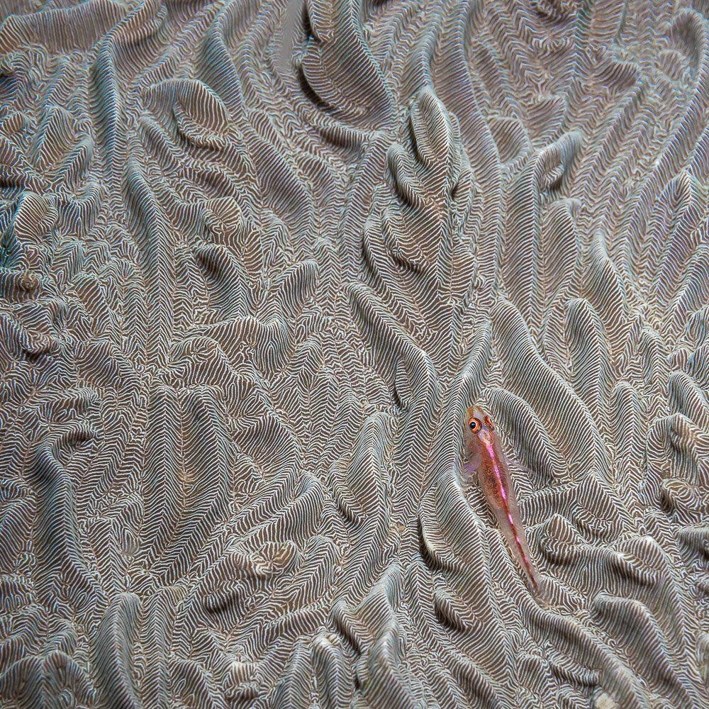 goby fish, Савин Андрей