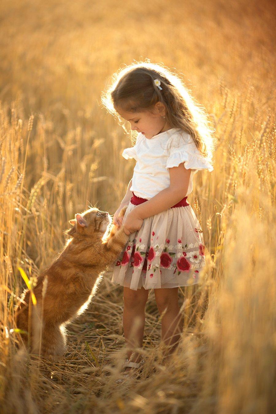 дети, девочка, детский портрет, детский фотограф, детская фотография, топ фотограф, семейный фотограф, пшеница, лето, кот, Мороз Валерия