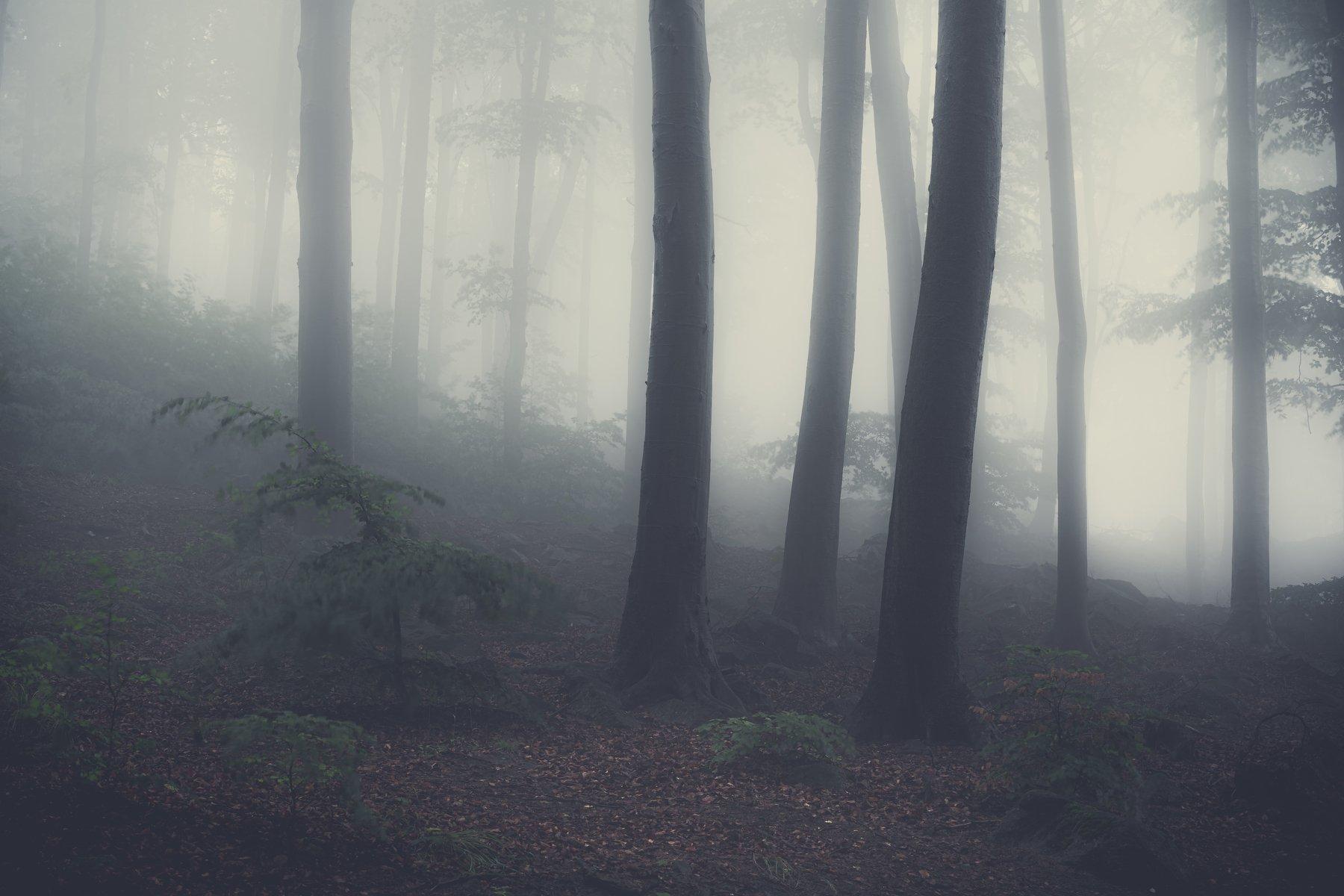 fog, forest, tree, field, rain, spring, poland, mountains, mystic, Myśliński Tomasz