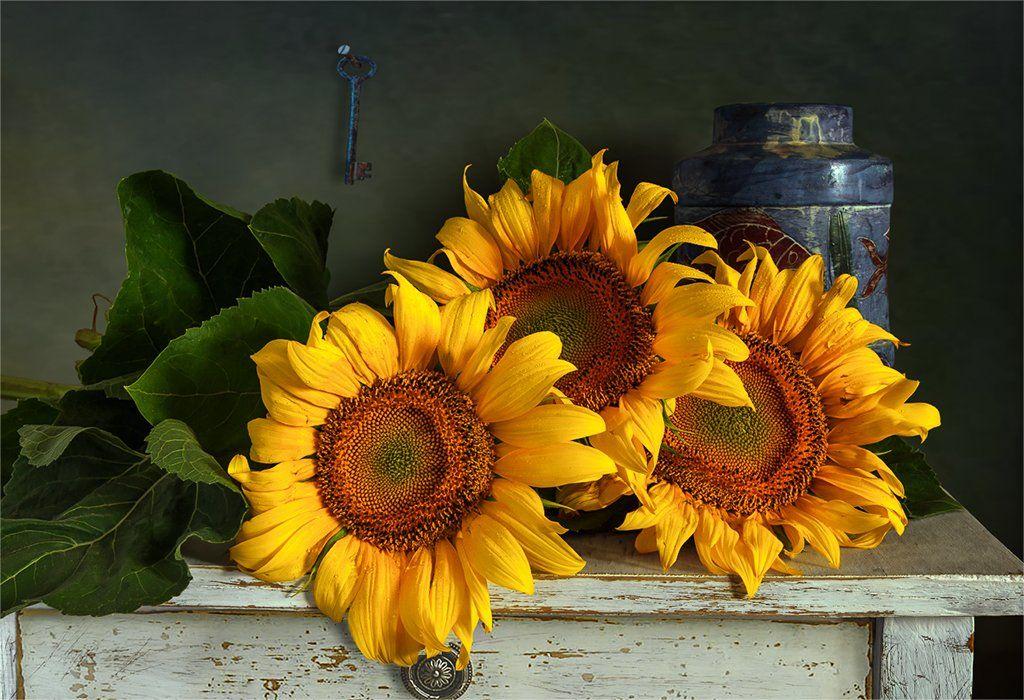 still life, натюрморт,    винтаж,    цветы,  подсолнухи, букет,, Шерман Михаил