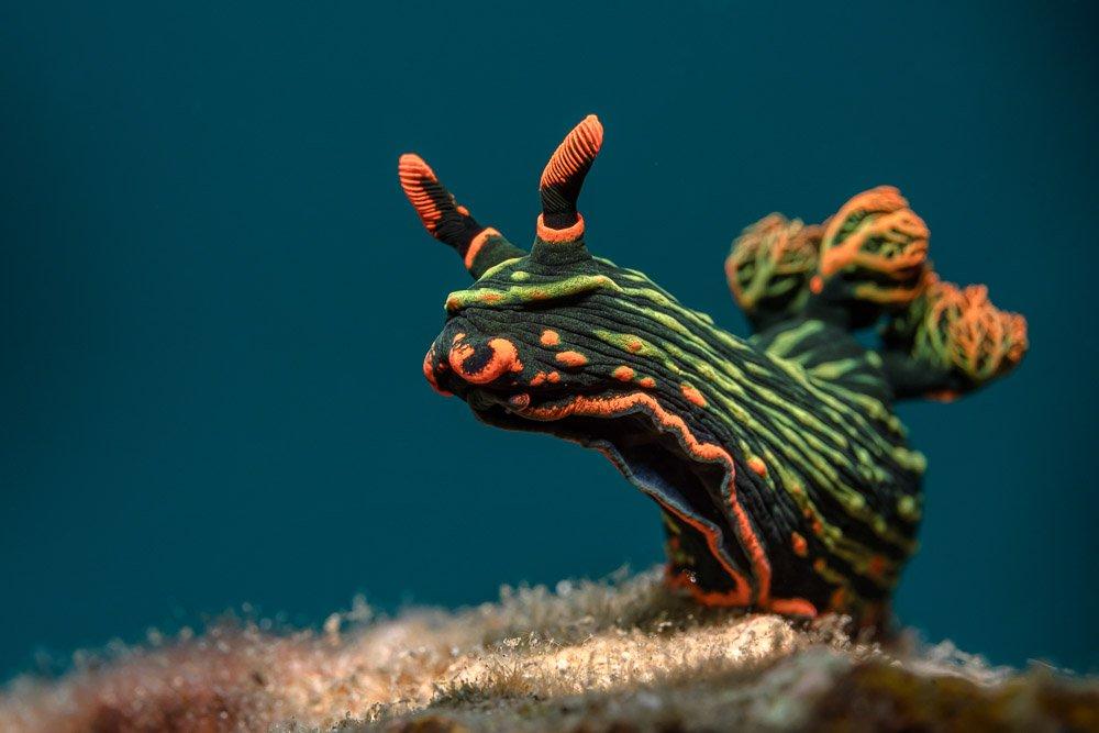 nudibranch, Савин Андрей
