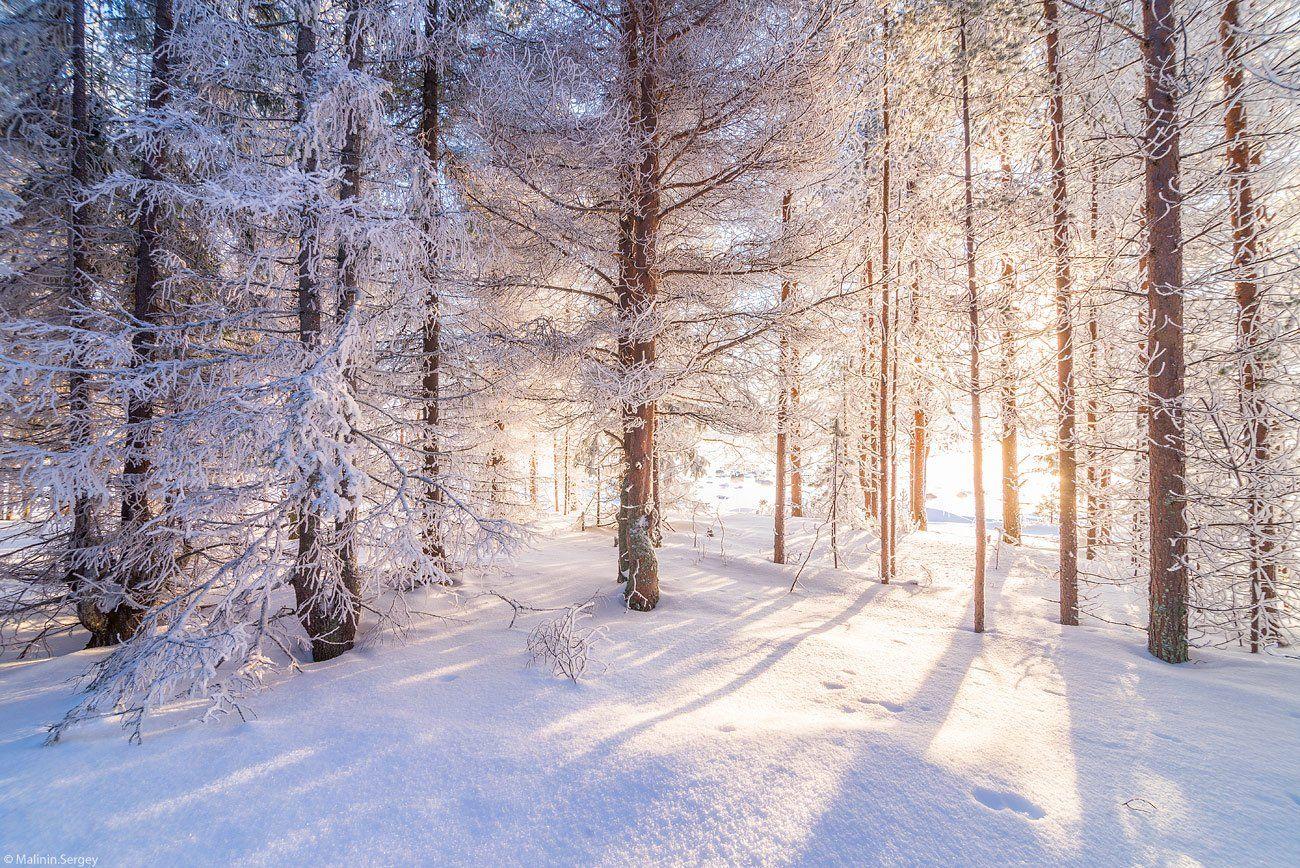 зима, мороз, свет, сосны, сказка, лес, Сергей Малинин