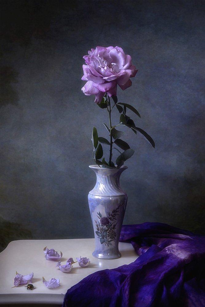 натюрморт, роза, винтажный, сумерки, мягкий свет, художественное фото, Приходько Ирина