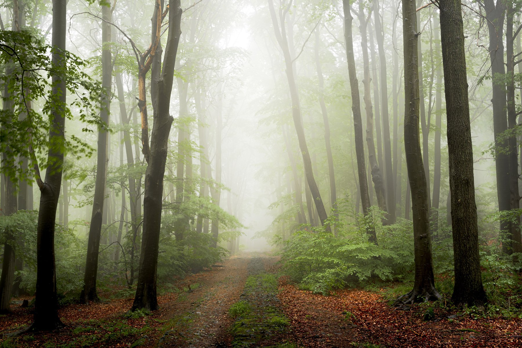 forest, fog, rain, spring, forest landscape, trees, road, mystical, mysterious, Myśliński Tomasz