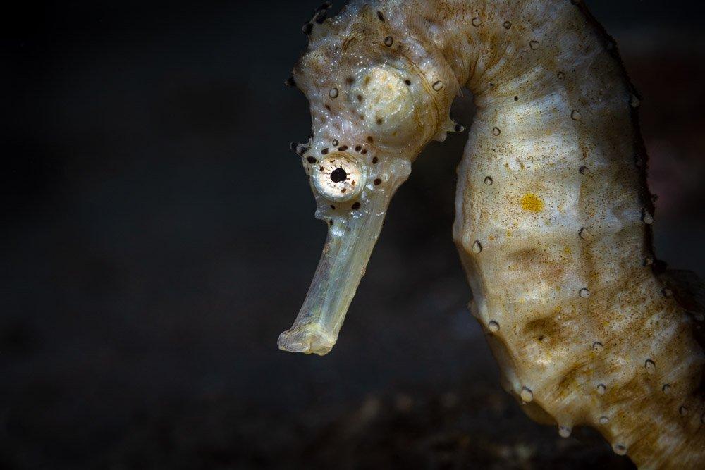 seahorse, underwater, macro, art, Савин Андрей