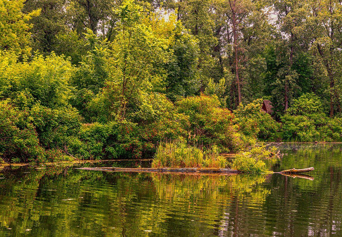 landscape, пейзаж,  лес,  деревья,  природа,   пруд, водоем, вода, берег, Шерман Михаил