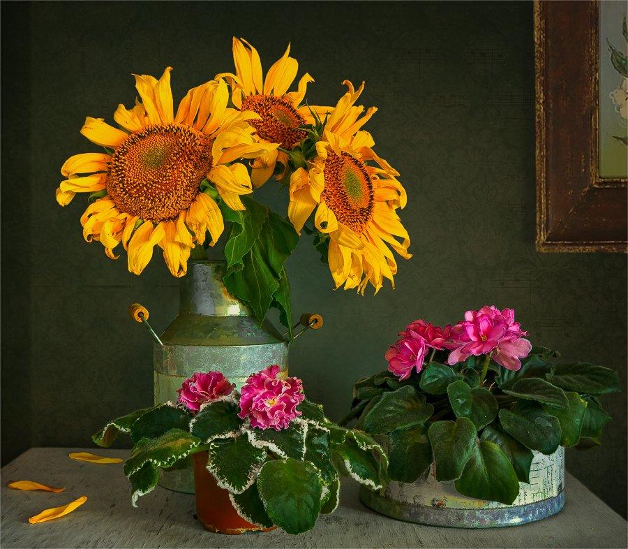 still life, натюрморт,    винтаж,    цветы,  подсолнухи, фиалки, букет,, Шерман Михаил