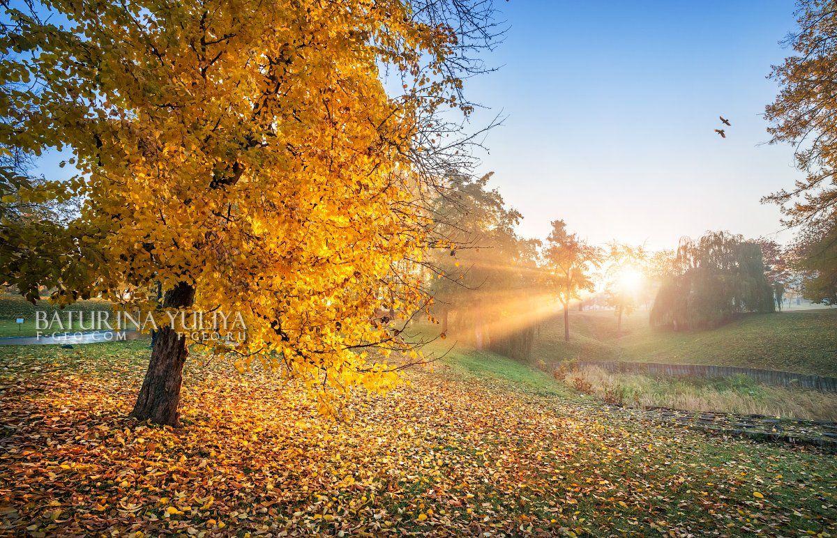 москва, царицыно, осень, Юлия Батурина