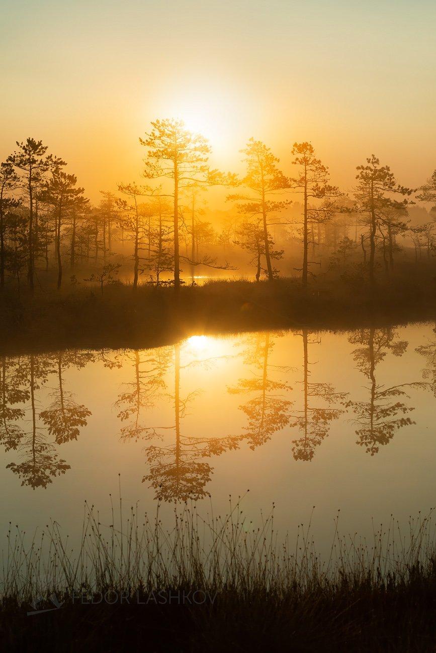 ленинградская область, рассвет, лето, август, тепло, сосна, озеро, солнце, туман, отражение, деревья, берег, оранжевый, жёлтый,, Лашков Фёдор