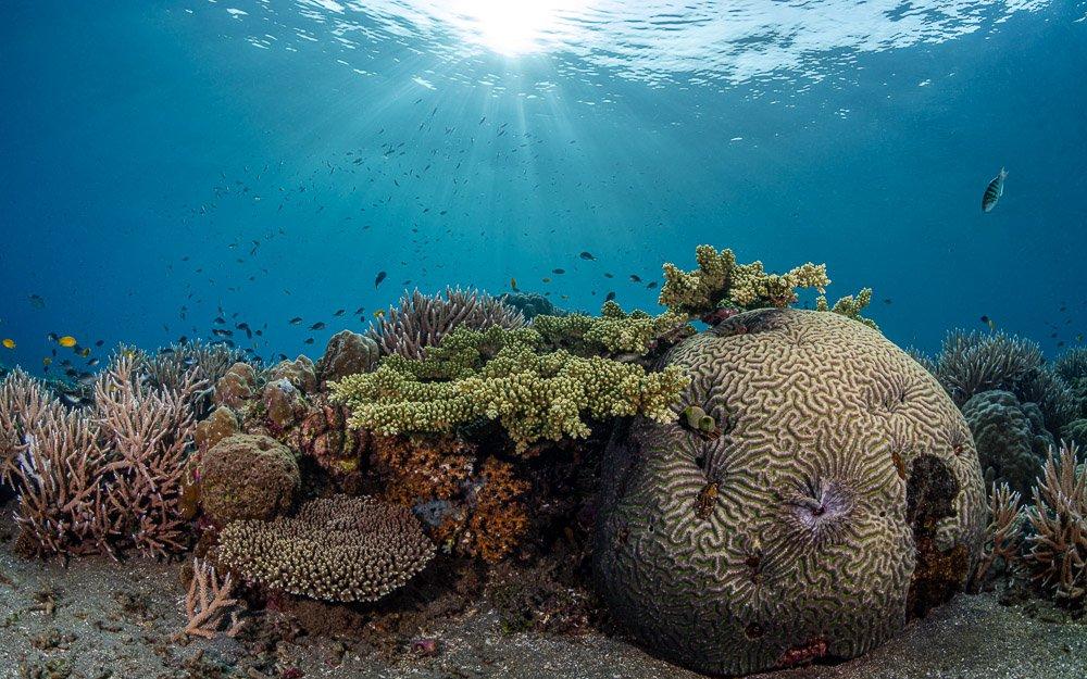 corals, кораллы, риф, подводой, море, океан, дайвинг, отпуск, солнце, синева, scuba, diving, природа, Савин Андрей