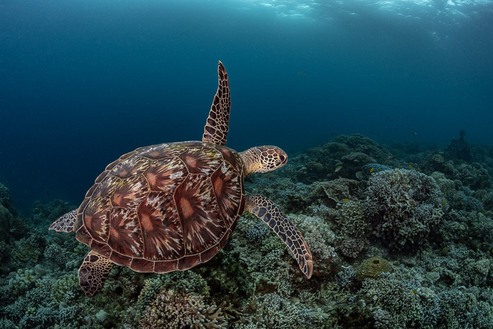 turtle, Савин Андрей