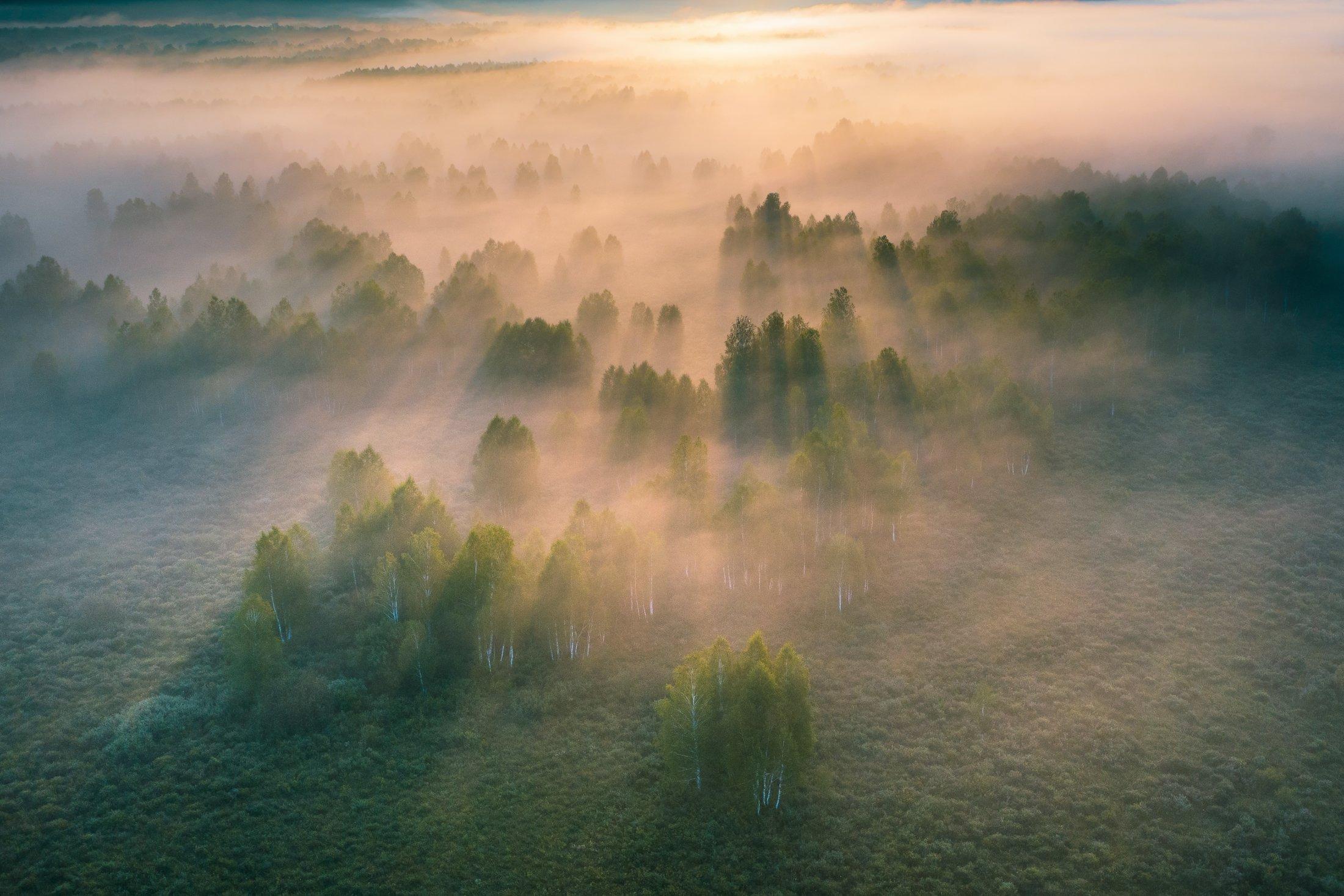 алтайскийкрай, алтай, тигирекскийзаповедник, туман, Соломахин Денис