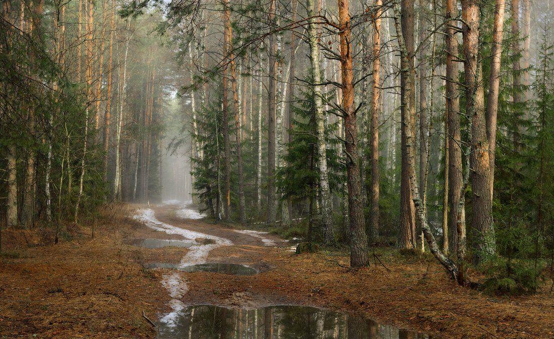 лес, апрель, дорога, снег, утро, Дмитрий