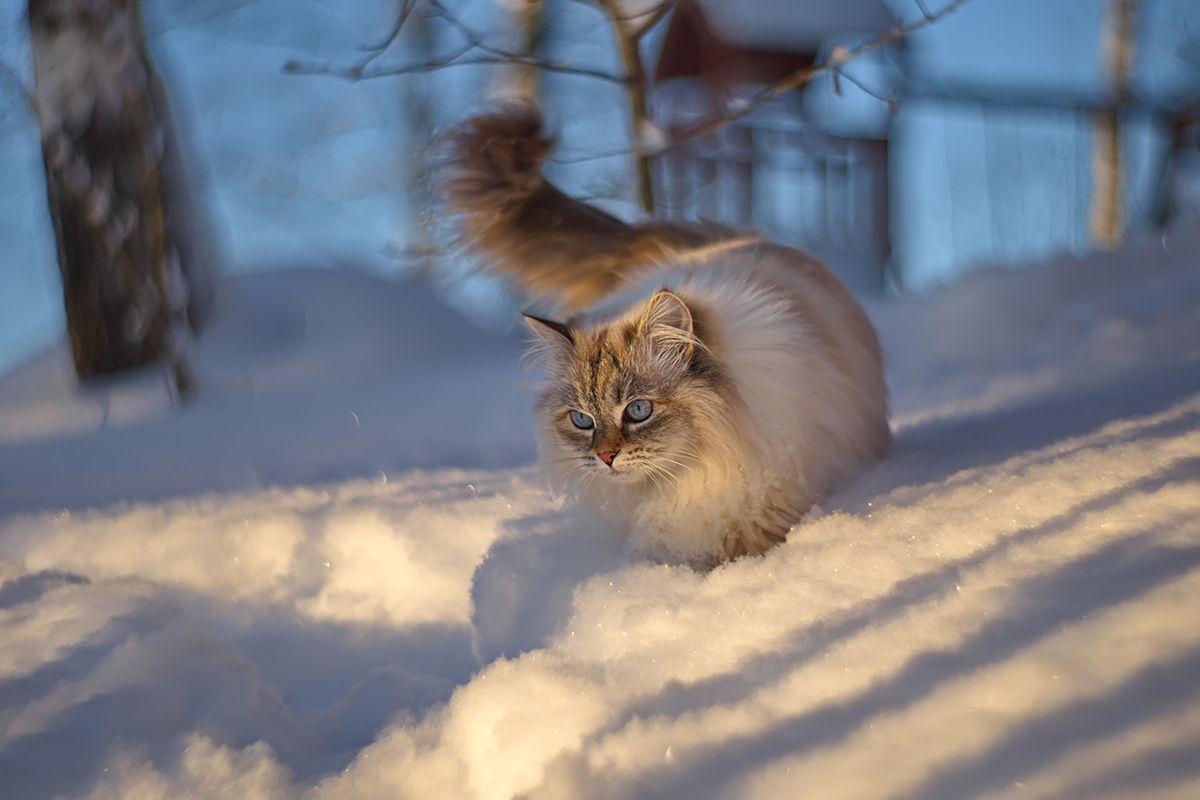 Зимняя прогулка Елена Соловьёва