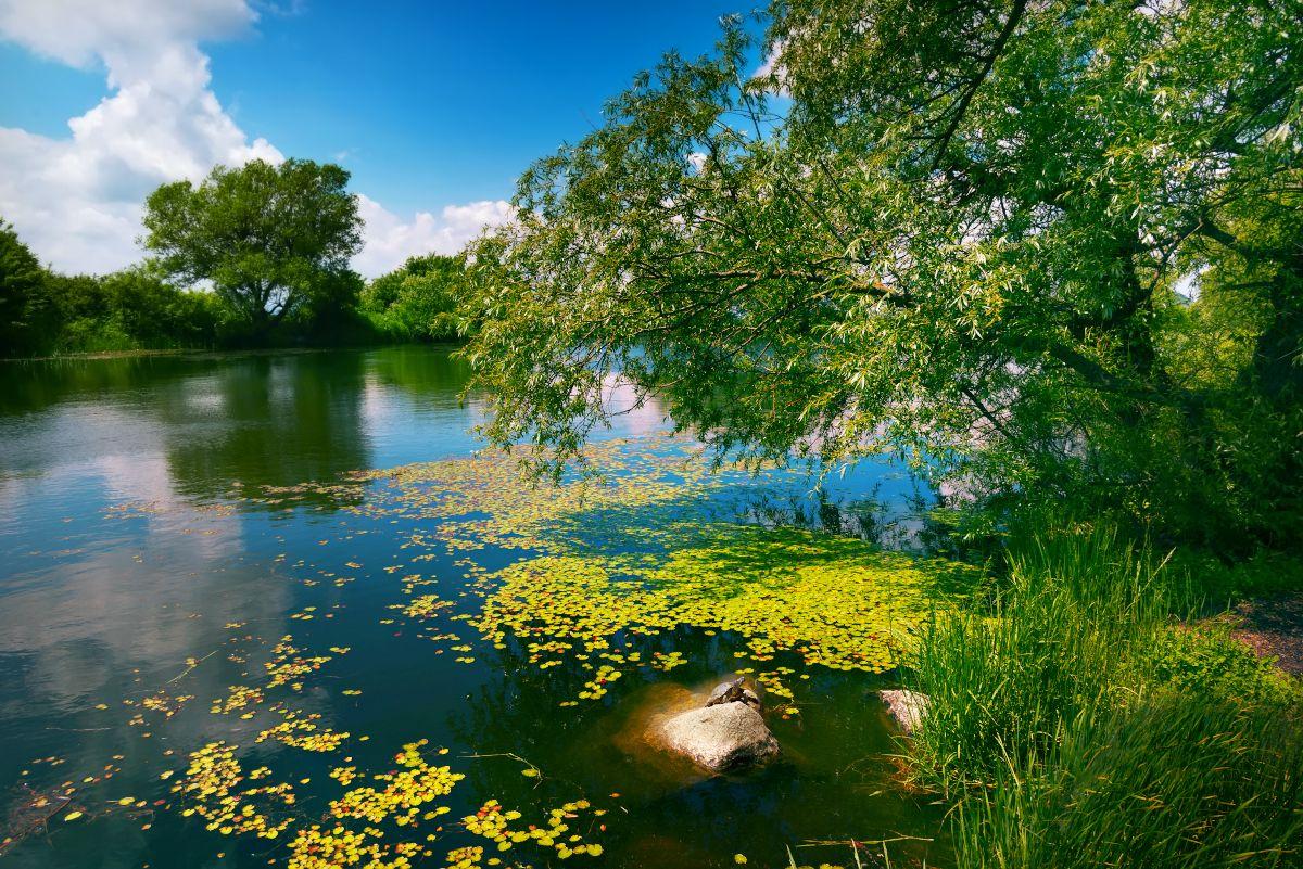Майское озеро с черепашкой. Елена Брежицкая