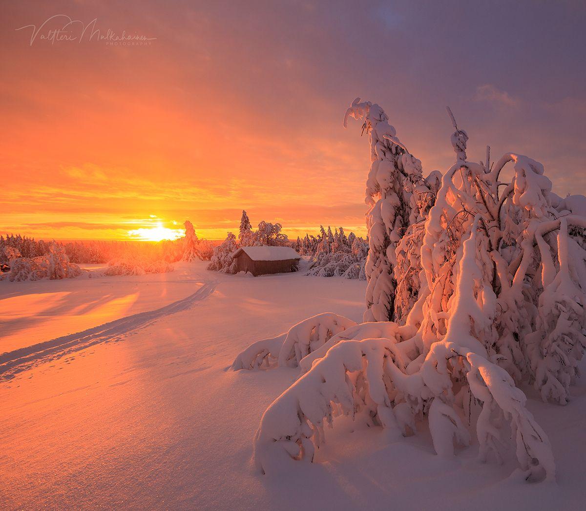 Зимнее солнце Лапландии.  Valtteri Mulkahainen