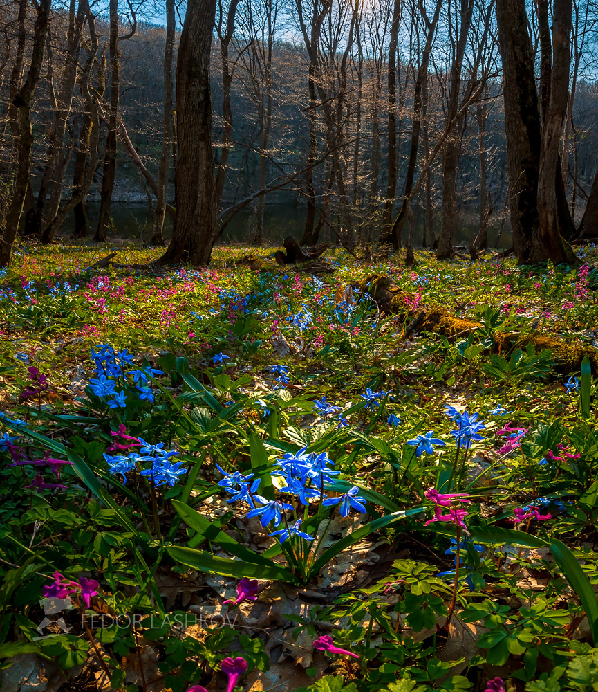 Первоцветы разбудили cказкой разноцветной!