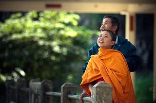 Молодой монах и его друг смотрят как спариваются обезьяны.