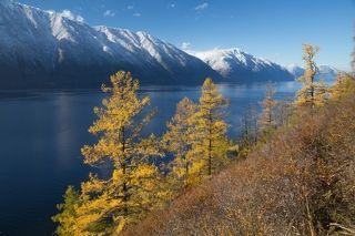 Пылающие лиственницы у крутого берега...