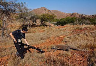 Комодские вараны ведут одиночный образ жизни, лишь изредка объединяясь в непостоянные группы во время кормёжки и в период спаривания.