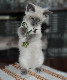 Цветочница Алиса...