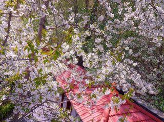 Яблоневый сад в горах Тегерана