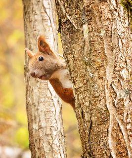 - Привет! Орехи принесла? )