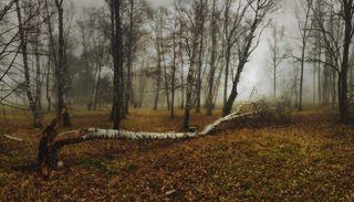 Вокруг упавшего дерева