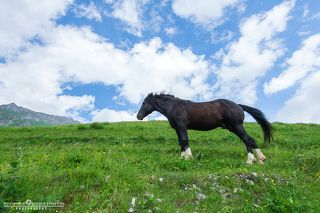 Wild horses of Mountain Saniba